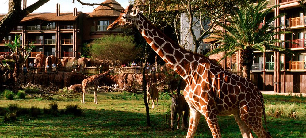 Animal Kingdom Villas Kidani animal