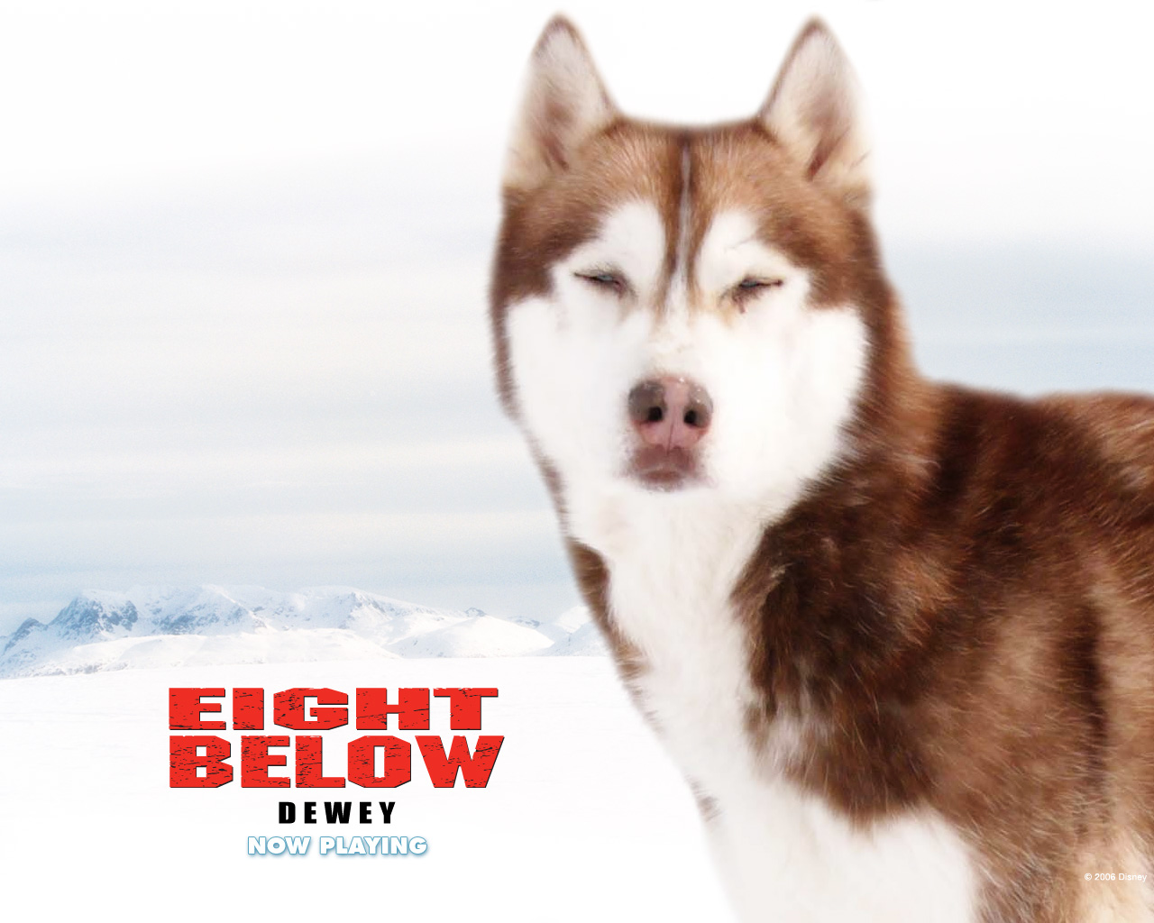 Eight Below-dewey