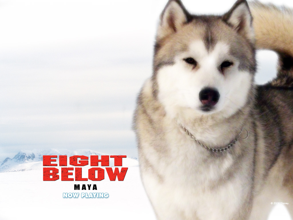 Eight Below maya