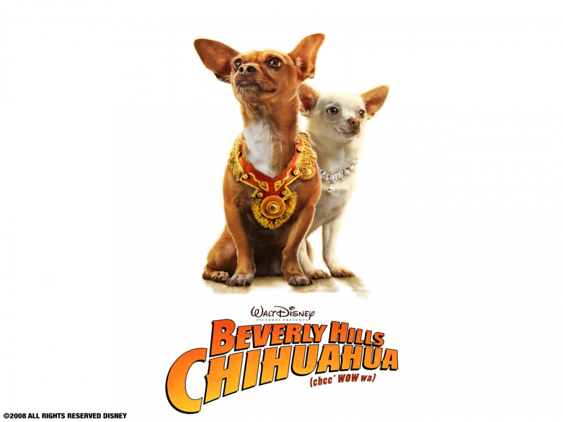 Beverly-Hills-Chihuahua-1152x864